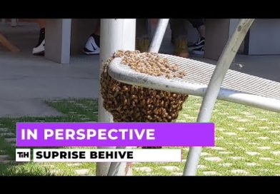 In Perspective: Surprise Hive | This is Happening
