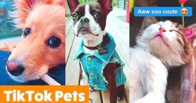 Animal TikToks That Will Make You AWW | Funny Pet Videos