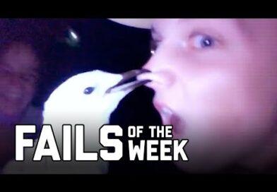 Bird is the Word: Fails of the Week (August 2020) | FailArmy