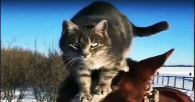 😂🤪Cats Will Make You Laugh Your Head Off 🤪😂 – Funny CAT compilation 2020 [Funny Pets]