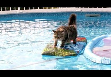 LAUGH SUPER HARD with ANIMALS vs WATER videos!